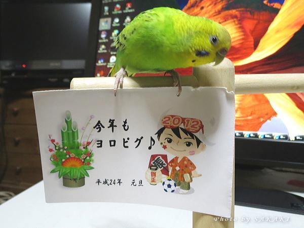 2012shogatsu.jpg