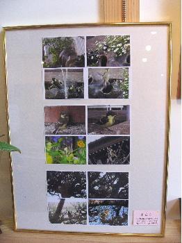 birdphotos.jpg