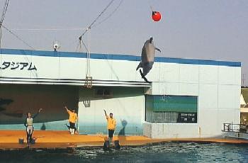 dolphinjump.jpg