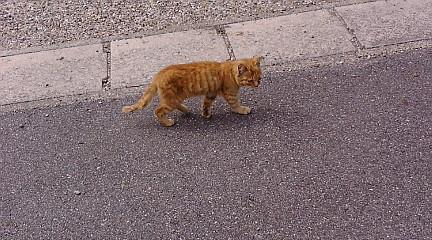 子猫 もしくは 子ぬこ