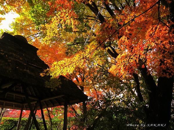 momiji2012_02.jpg