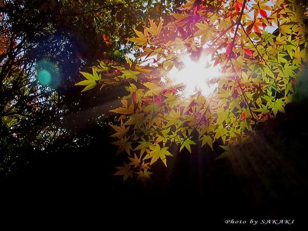 momiji2012_03.jpg