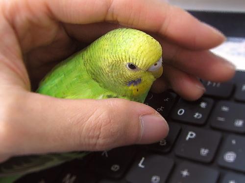 pchan_keyboard.jpg