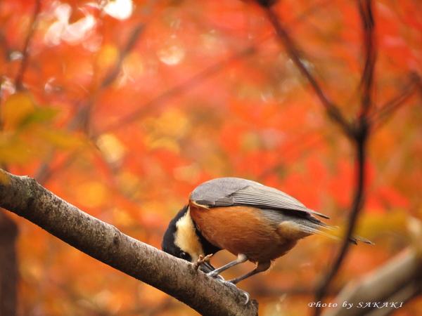 yamagara2012_02.jpg